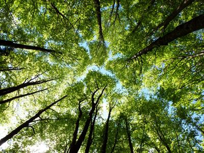 spirito-degli-alberi_47_2