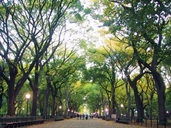 verde-urbano